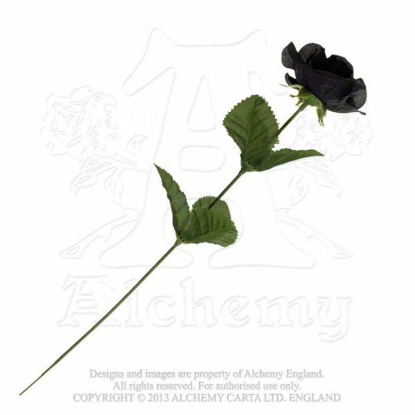 Gothic Rose mit schwarzer Rosenblüte